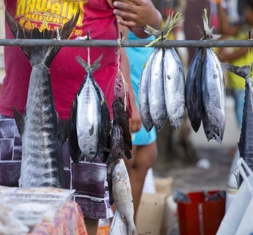 poissons a vendre